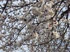 Spring in Vidin 01