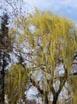 Spring in Vidin 08