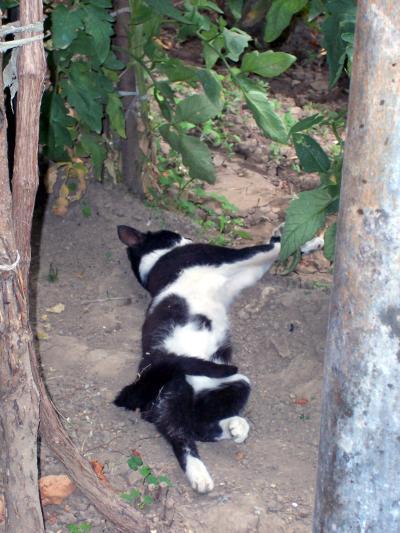 котка се протяга