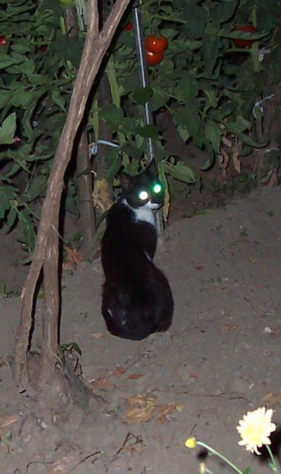 гледаща котка