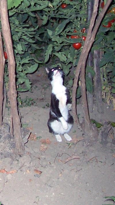котката дебне